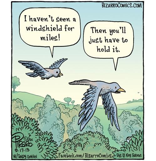 That's what you get bird... - meme