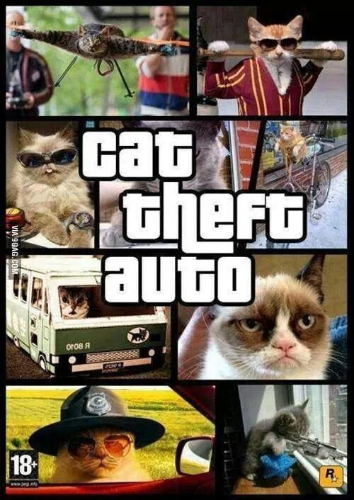 cat theft auto - meme