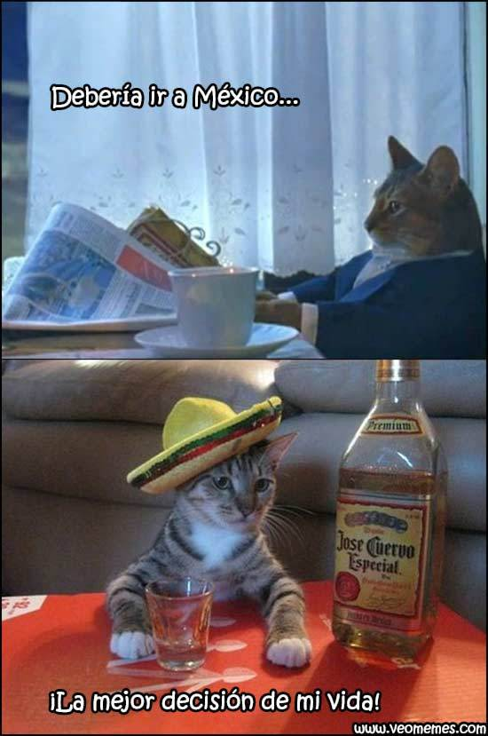 Miau - meme