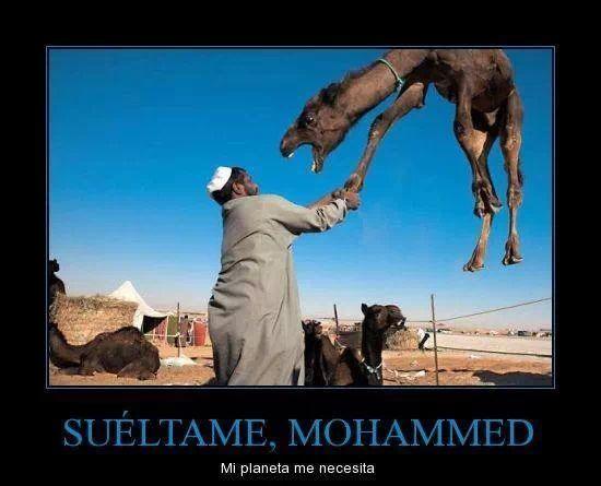 Mohameeed!! - meme