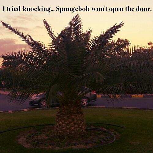SpongeBob's home outside water. - meme