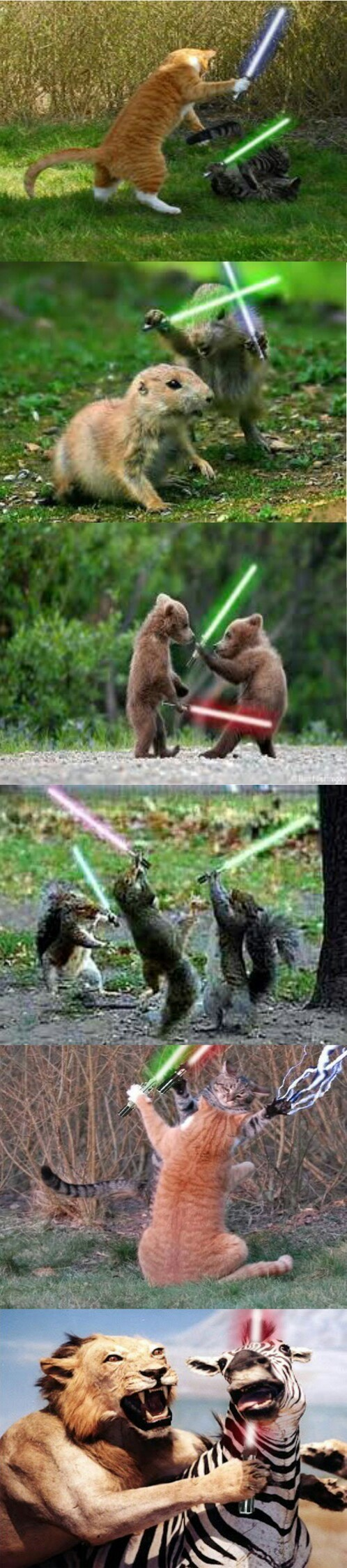 animals star wars - meme