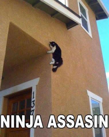 cat assassin - meme
