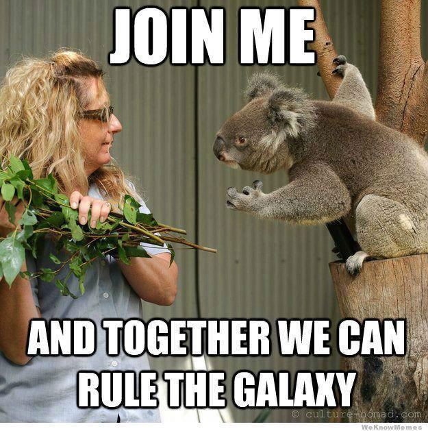koalas are evil - meme