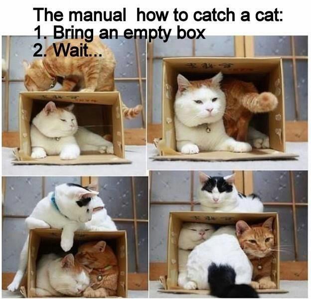 Cat trap - meme
