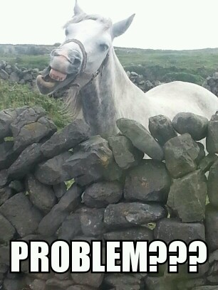 troll horse - meme
