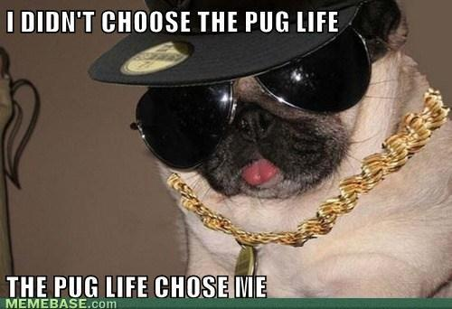 pugs4life - meme
