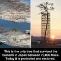 Japan Survivour