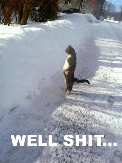 I don't want snow.... - meme