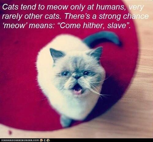 come hither slave - meme