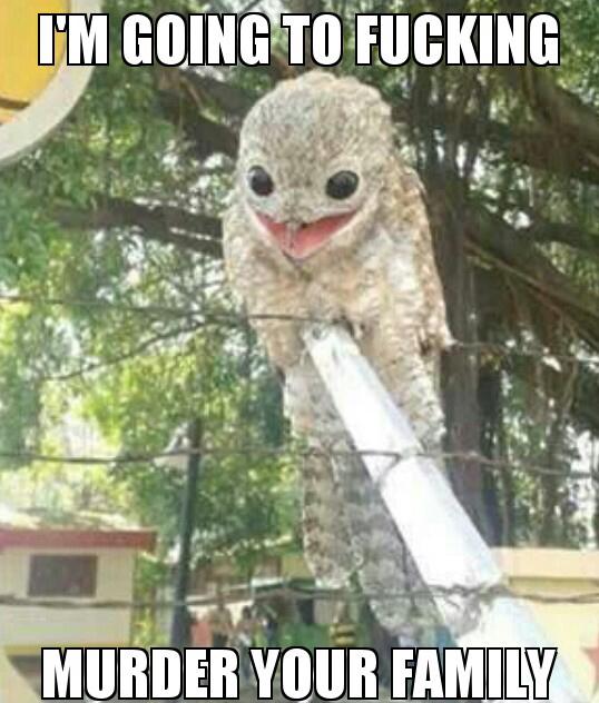Potoo bird is crazy - meme