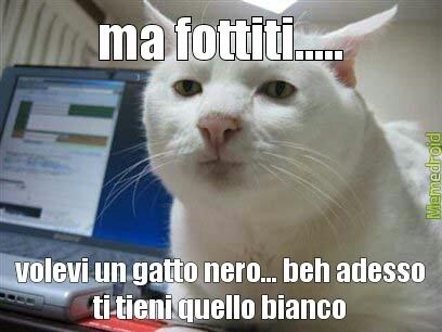 fottuto gatto - meme