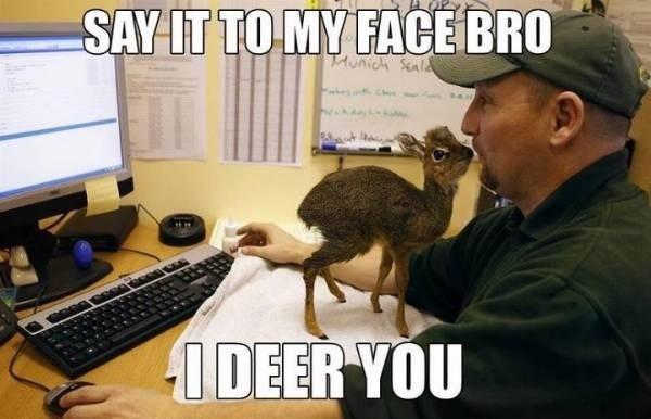 I deer you - meme