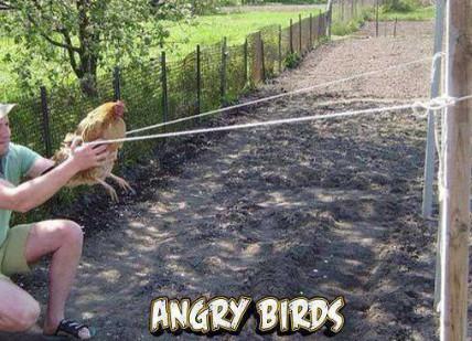 angri gallinas - meme
