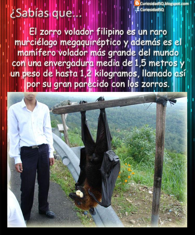 Zorro Volador :3 - meme