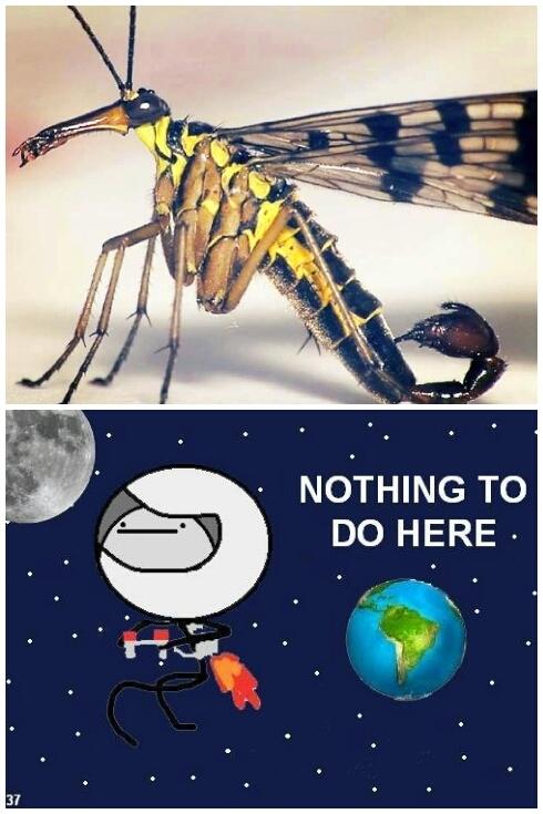 flying scorpion! ! - meme