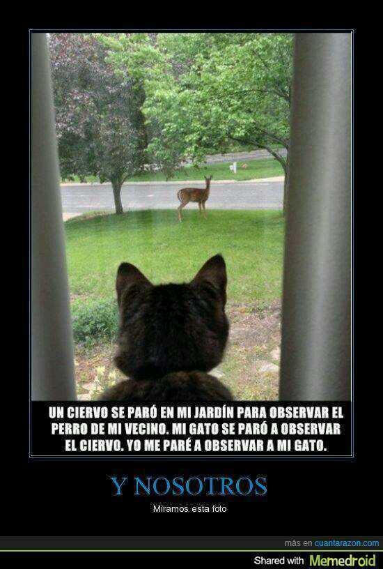 Gato,Ciervo,Yo,Tu,Perro... - meme