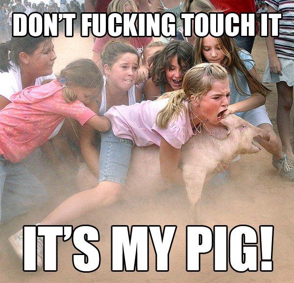 MY PIG - meme
