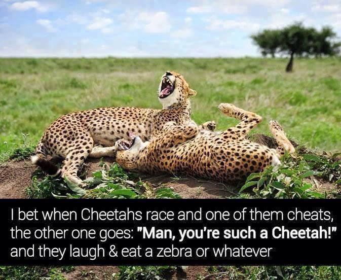 Cheetah! - meme