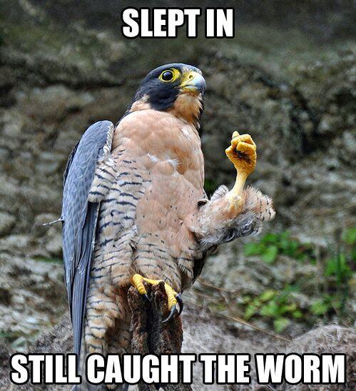 The early bird. - meme