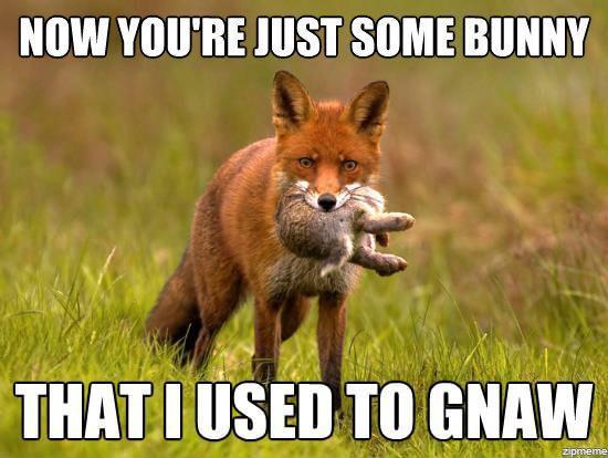 fox - meme