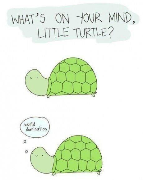 So tiny turtle? - meme