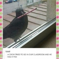 that crow went to my school...he got a full scholarship to Harvard
