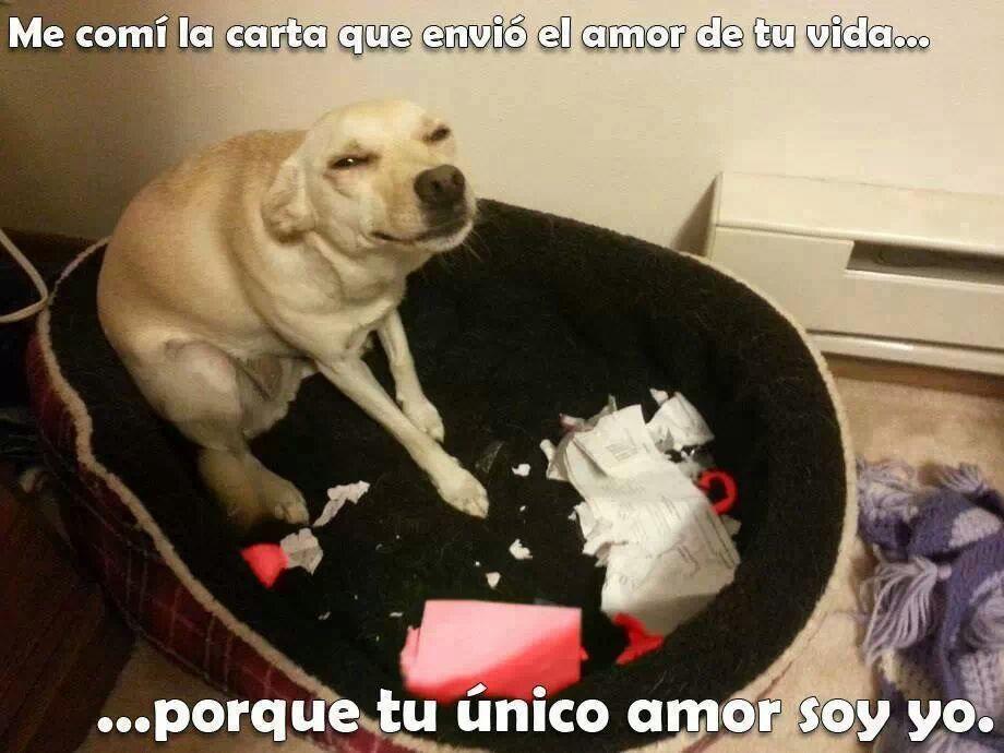 perro amor - meme