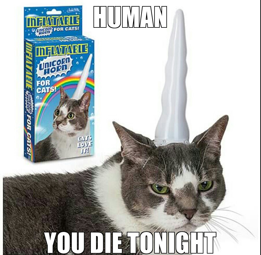 Would you buy this for your cat ? - meme