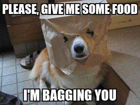 i'm bagging you - meme