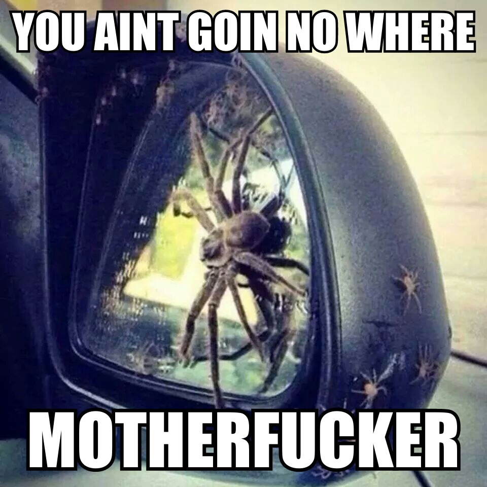 GOOD LORD SPIDERS DX - meme