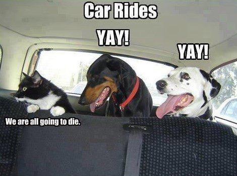 Car trips - meme