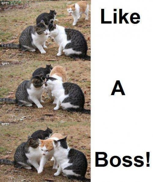 Like a Boss 4 - meme