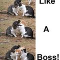 Like a Boss 4