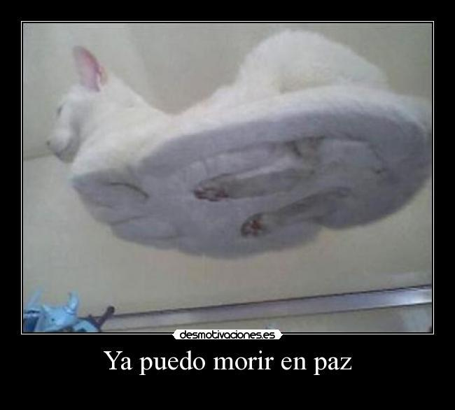 el gato que nos revelo su secreto xD soy gilipollas - meme