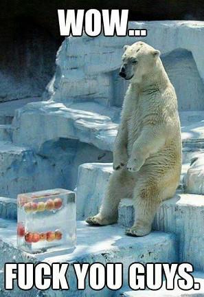 Poor bear... - meme
