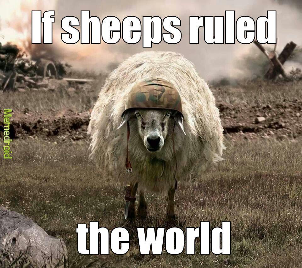 sheeps - meme