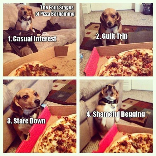 The Four Stages of Begging - meme