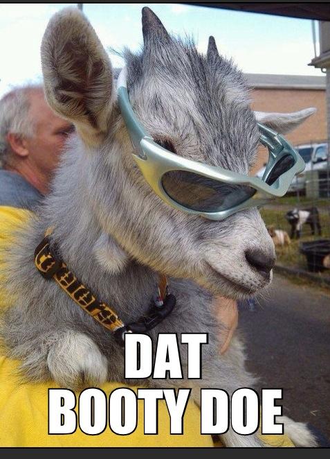 toats ma goat  - meme