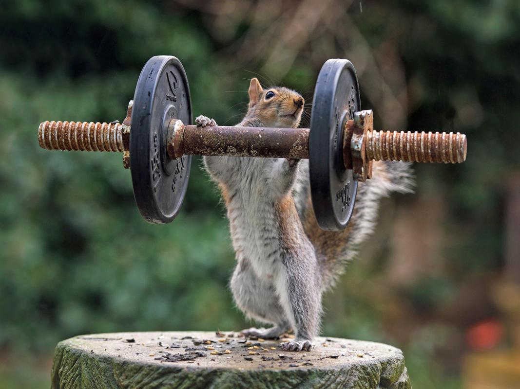 Надписью, смешные прикольные картинки про спорт мотивацию