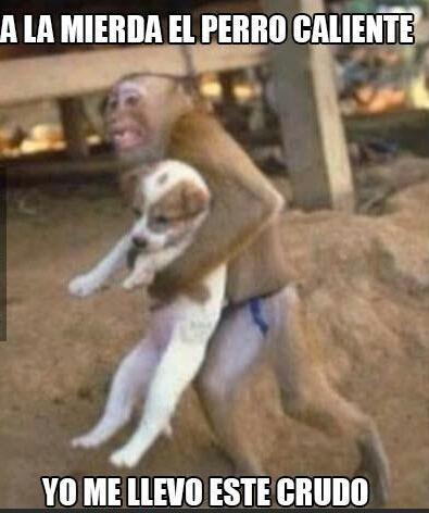 532f8f9d20958 perro caliente meme subido por rc81 ) memedroid