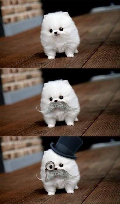 531ca71fe89b0 what a fancy dog!! meme by shitstirer ) memedroid