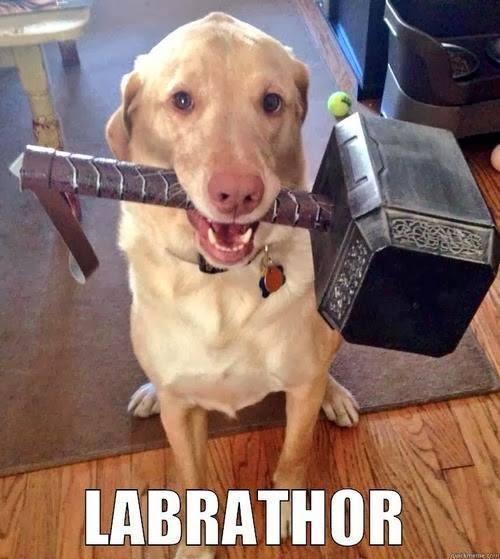 Labrathor - meme