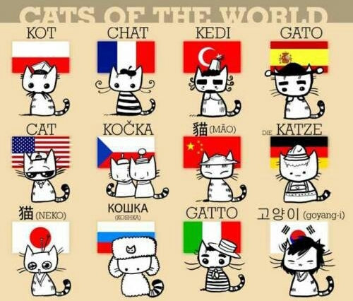 Say cat in your language ! :)) - meme