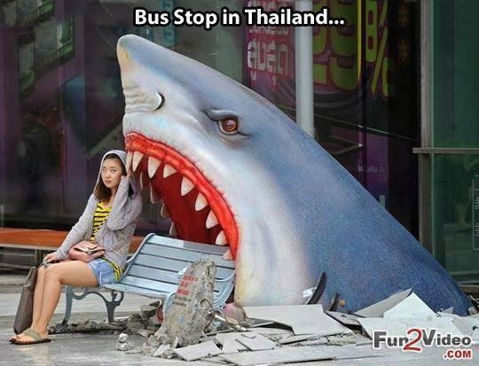Narmol....nous on a des vieux arrêts de bus quans ils n'sont pas pétés!!! - meme
