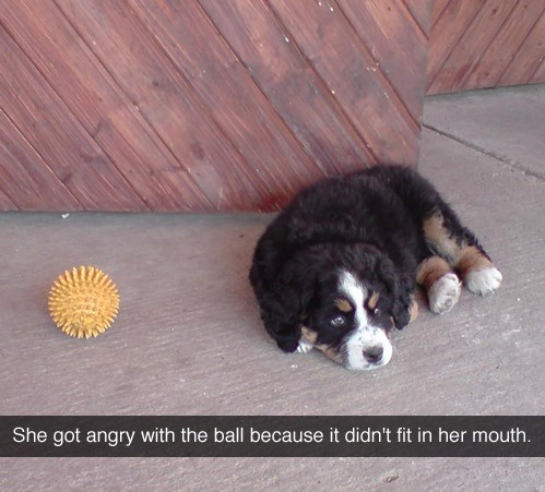 You Just Wait, Ball... - meme