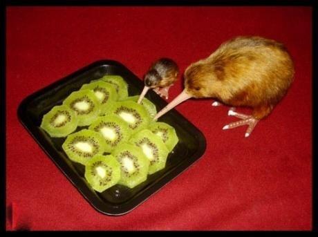 Des Kiwis cannibales 0_o - meme