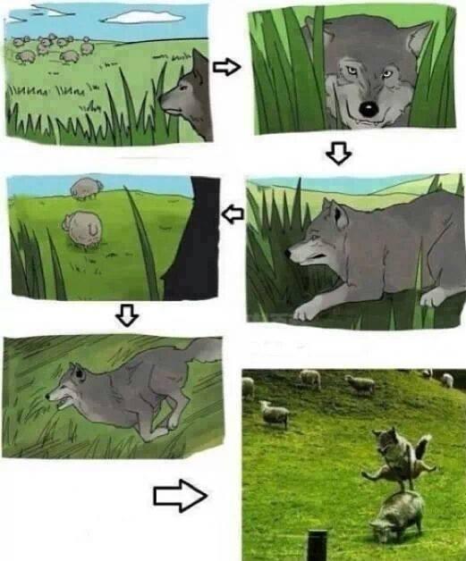 wolf :O - meme