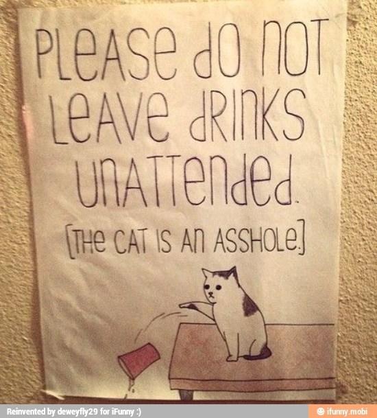 U own cat? - meme