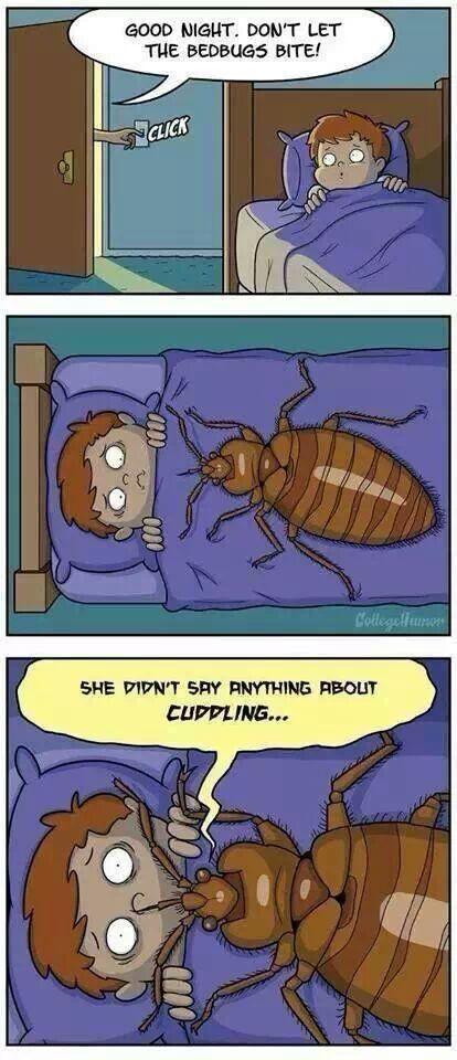 cuddle bug - meme